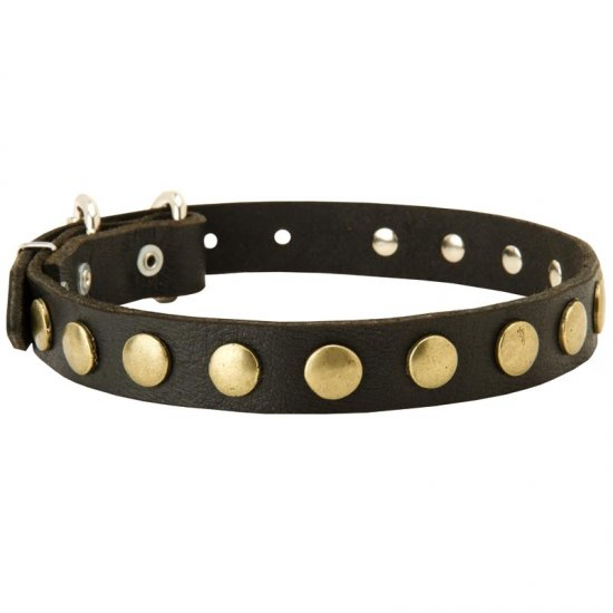 Leather Collie Collar with Brass Circles for Fashionable Walking