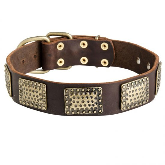 Leather Collie Collar with Massive Brass Plates
