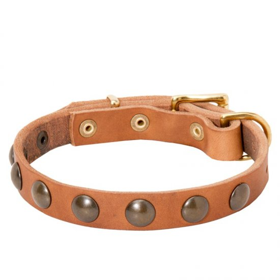 Leather Collie Collar with Brass Half-Ball Studs