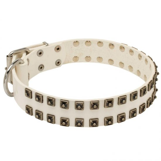 White Leather Collie Collar with Old Nickel Square Studs for Daily Dog Walking - NEW OFFER