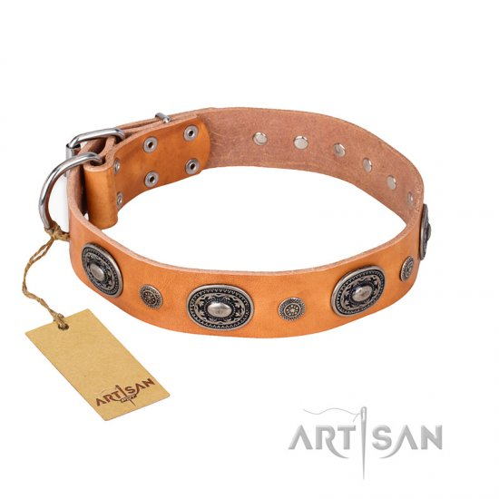 """Twinkle Twinkle"" FDT Artisan Incredible Studded Tan Leather Collie Collar"