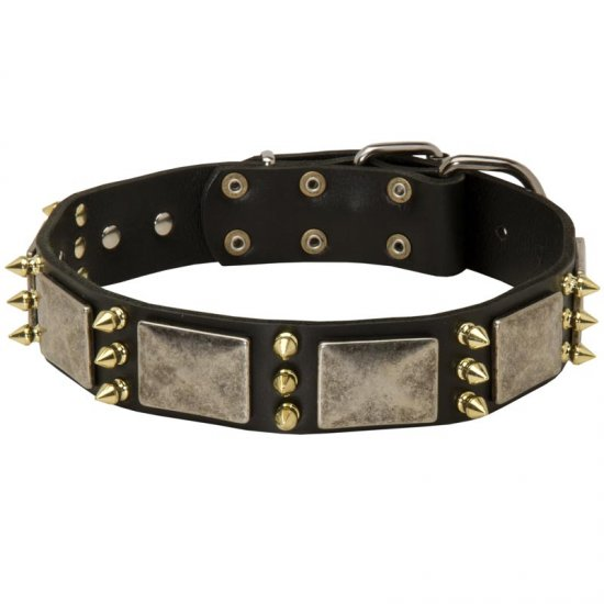 Collie Spiked Leather Collar with Nickel Plates
