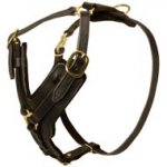 Padded Leather Collie Harness for Agitation Training