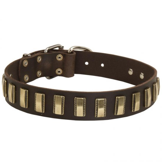 Leather Collie Collar with Awesome Brass Plates