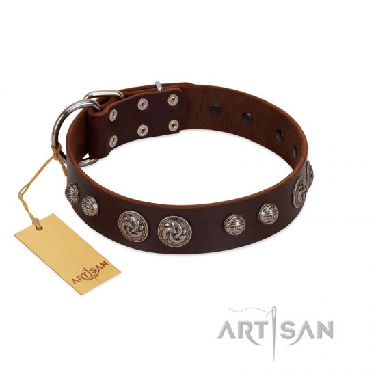 """Choco Brownie"" FDT Artisan Brown Leather Collie Collar Adorned with Silver-Like Conchos"