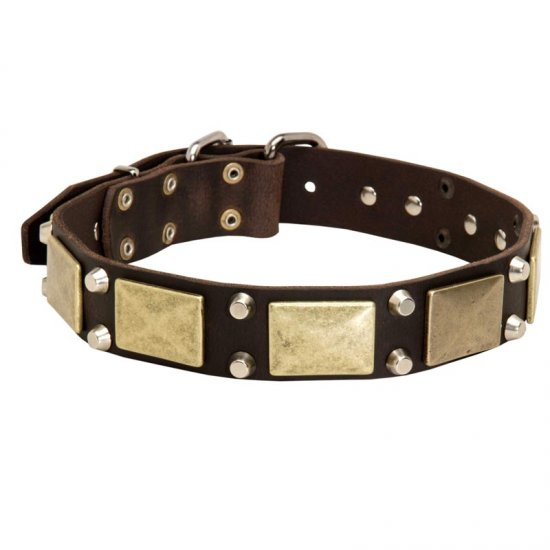 Leather Collie Collar with Studs and Plates