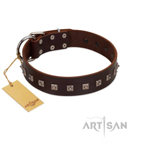 """Kingly Grace"" FDT Artisan Brown Leather Collie Collar with Silver-like Dotted Studs"