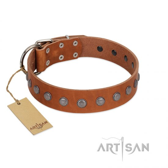 """Little Floret"" Fashionable FDT Artisan Tan Leather Collie Collar with Silver-Like Adornments"