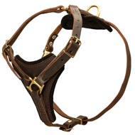 Tracking Leather Collie Harness With Y-Chest Plate