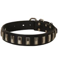 Collie Leather Collar with Shiny Plates