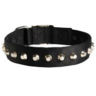 Exclusive Nylon Collie Collar with Awesome Nickel Cones
