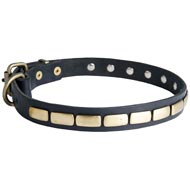 Collie Leather Collar Brass Plates 25 mm
