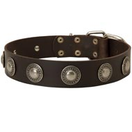 Leather Collie Collar Decorated with Silver Conchos