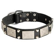 Leather Collie Collar Decorated with Nickel Cones and Plates