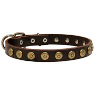 Leather Collie Collar with Brass Dotted Circles for Fashion Walking