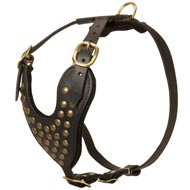 Adjustable Studded Leather Collie Harness for Fashion Walking