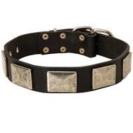 Leather Collie Collar with Large Nickel Plates