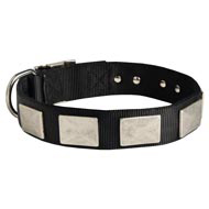 Nylon Collie Collar Massive Nickel Plates