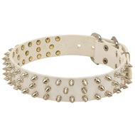 Designer Spiked Leather Collie Collar for Fashionable Walking