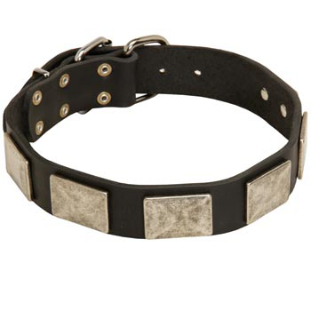 Walking Leather Collie Collar