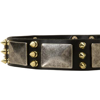 Stylish Leather Dog Collar for Collie