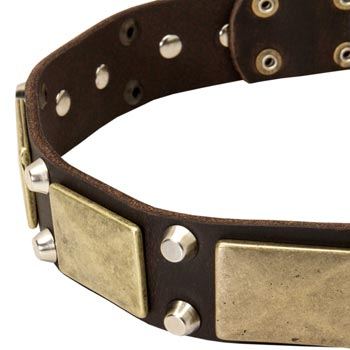 Leather Collie Collar with Nickel Studs