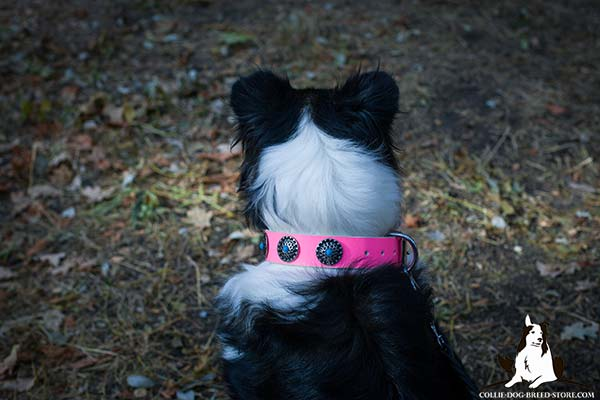 Collie pink leather collar for snug fit decorated with plates for daily walks