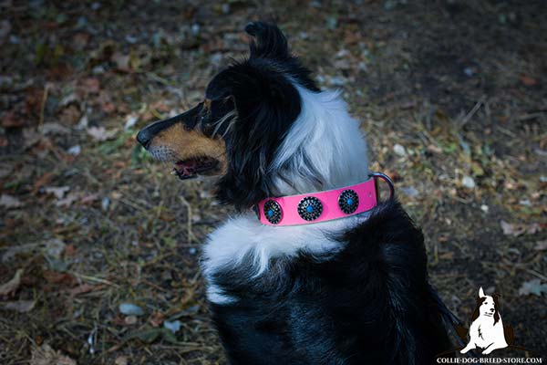Collie pink leather collar of classy design with plates for stylish walks