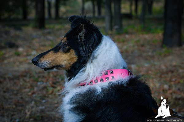 Collie pink leather collar adjustable  with studs for improved control