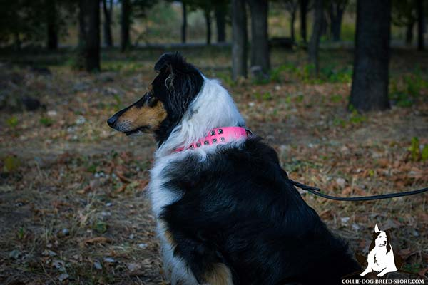Collie pink leather collar of genuine materials with handset studs for daily walks