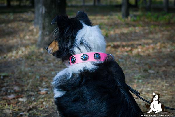Collie pink leather collar with elegant plates for daily activity