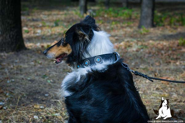 Collie black leather collar easy-to-adjust with handset decoration for walking in style
