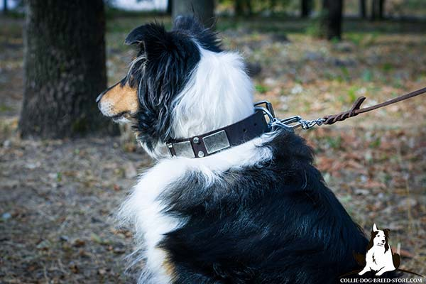 Collie brown leather collar of classic design with traditional buckle for any activity