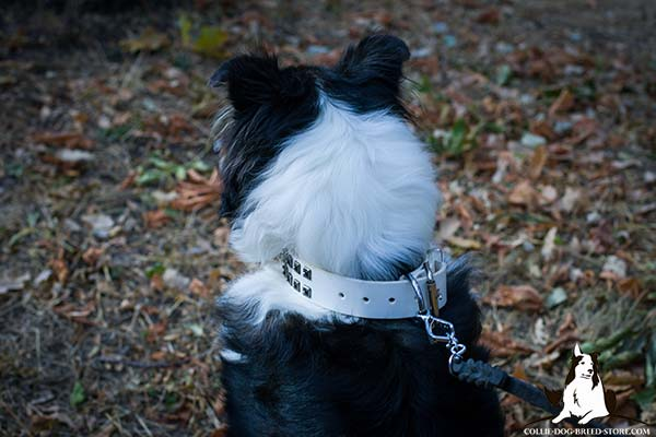 Collie white leather collar snugly fitted adorned with studs for daily activity