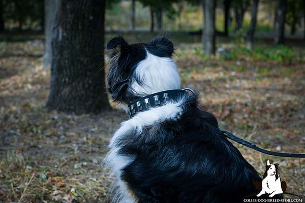 Collie black leather collar of classy design with traditional buckle for daily walks