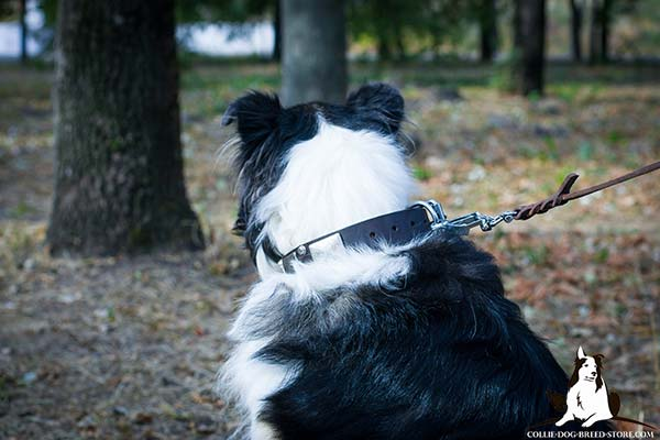 Collie brown leather collar of genuine materials with handset adornment for daily walks