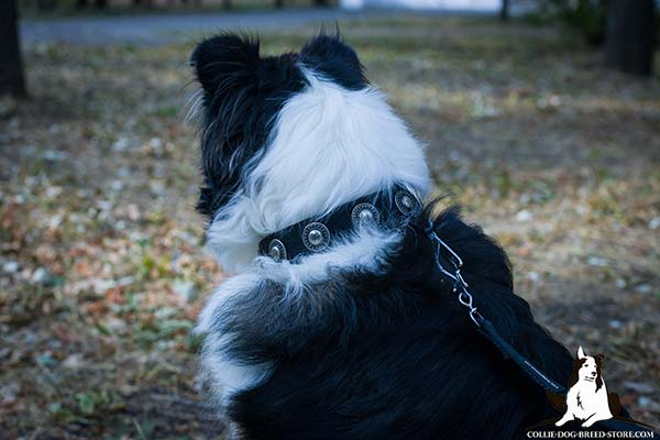 Collie nylon collar with rust-free nickel plated fittings for professional use