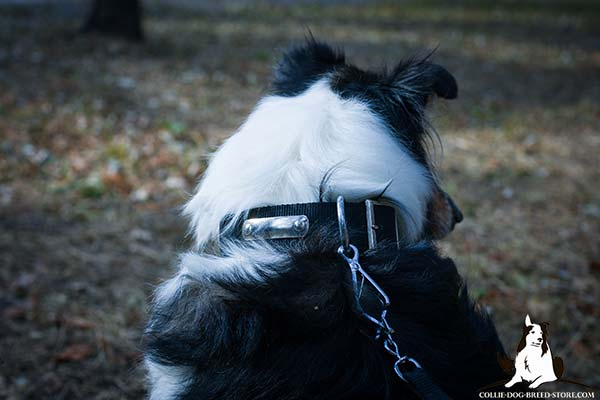 Collie nylon collar with rust-proof fittings for improved control