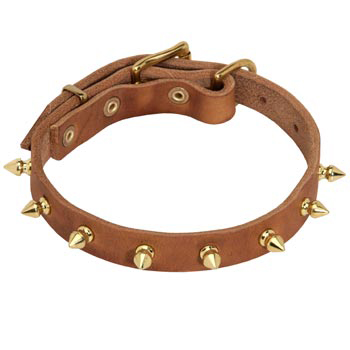 Designer Leather Collar for Collie