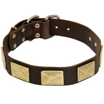 Leather Collie Collar with Fashionable Studs