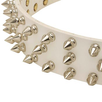 Spiked White Leather Collar for Collie Walking