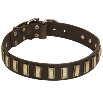 Leather Collie Collar Designer for Walking in Style