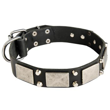 Studded Leather Collie Collar