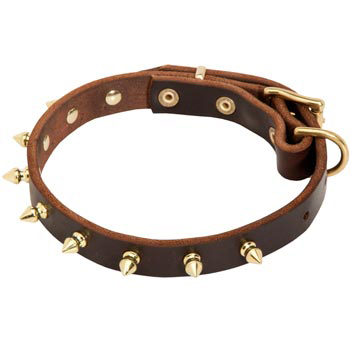 Leather Collie Collar with Brass Spikes