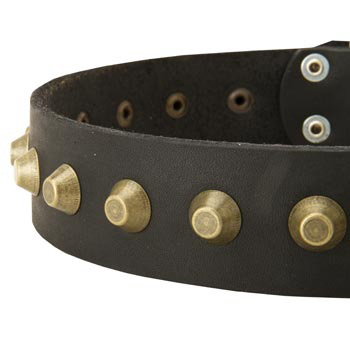 Leather Dog Collar with Brass Pyramids for Collie