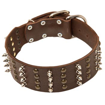 Leather Collar for Collie Walking in Style