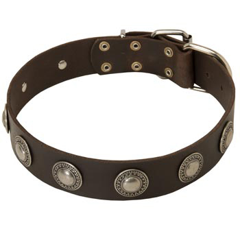 Training Leather   Collie Collar for Stylish Dogs