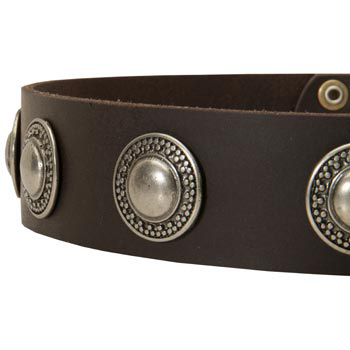 Leather Dog Collar with Conchos for   Collie