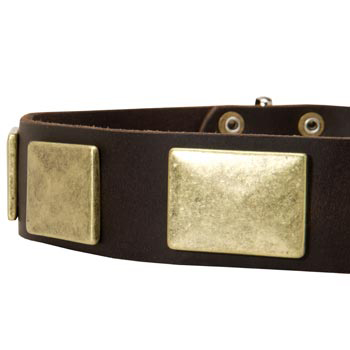 Leather Dog Collar with Massive Brass Plates for Collie