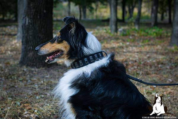 Awesome walking leather Collie collar with embossed plates